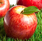 Picture of Hunnyz or Jazz Apples