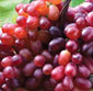 Picture of Extra Large Seedless Red Grapes