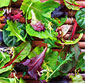 Picture of Spring Salad Mix