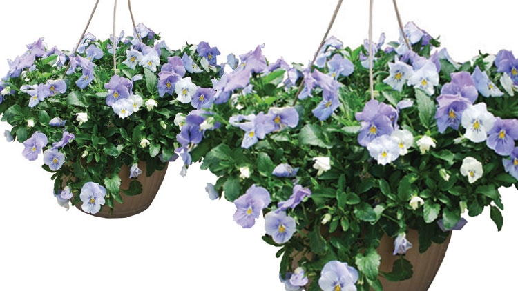 Picture of Hanging Basket