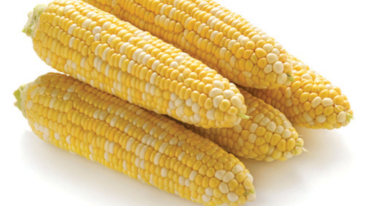 Picture of Fresh Cuts Honey & Cream Sweet Corn