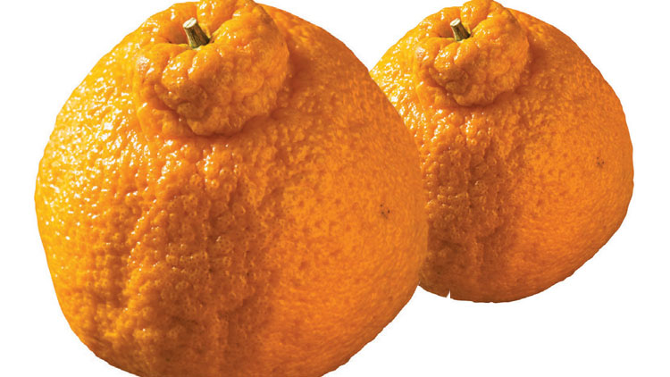 Picture of Sumo Mandarins