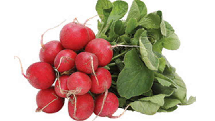 Picture of Green Top Red Radishes