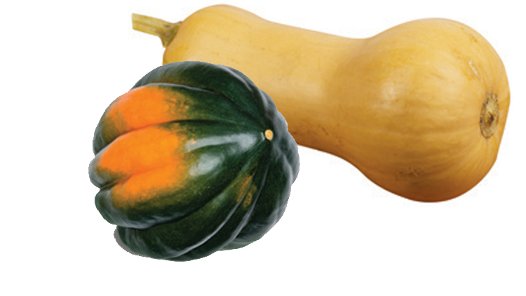 Picture of Acorn, Spaghetti, Buttercup or Butternut Squash
