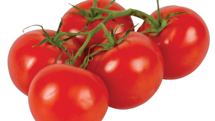 Picture of On Vine Tomatoes