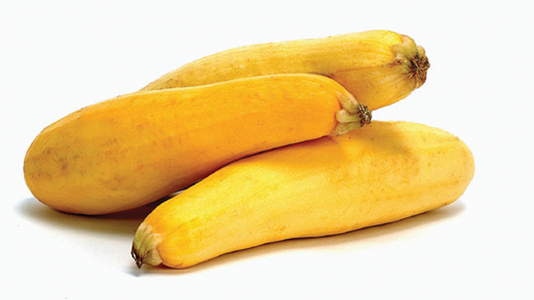 Picture of Zucchini or Yellow Squash